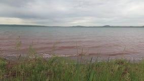 Трава степи пошатывая в ветре на береге озера видеоматериал