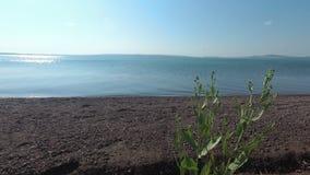 Трава степи пошатывая в ветре на береге озера акции видеоматериалы