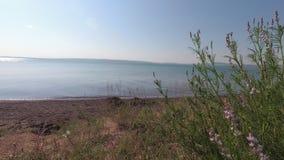 Трава степи пошатывая в ветре на береге озера сток-видео