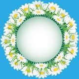 трава стоцвета Стоковое фото RF