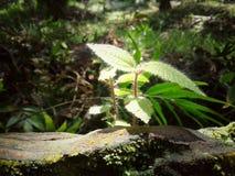 Трава с блеском стоковые изображения rf