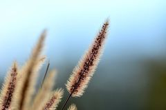 Трава с голубой предпосылкой стоковое фото