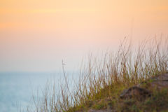 Трава с заходом солнца в twilight времени на море Стоковая Фотография