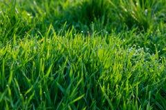 Трава с картиной росы стоковая фотография
