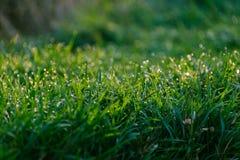 Трава с картиной росы стоковое фото