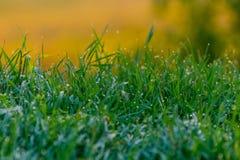 Трава с картиной росы стоковые фотографии rf