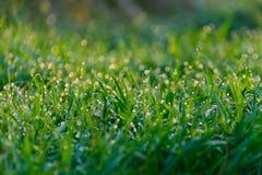 Трава с картиной росы стоковые изображения