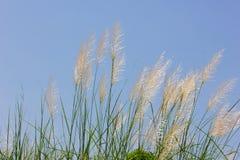 Трава с небом Стоковая Фотография