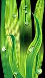 Трава с падениями росы Стоковое фото RF
