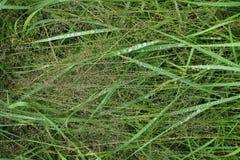Трава с падениями воды Стоковая Фотография