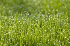 Трава с росой утра Стоковые Фото