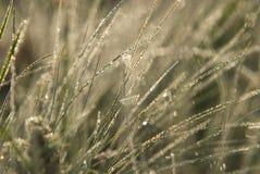 Трава с росой Стоковое фото RF