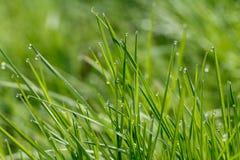 Трава с росой Стоковые Фото