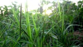 Трава с светом Солнця в предпосылке Стоковая Фотография