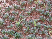 Трава - текстура Стоковые Изображения RF