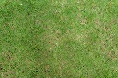 Трава текстуры Стоковые Изображения RF