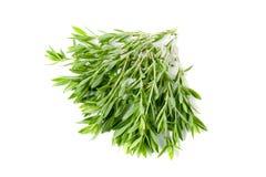 Трава тимиана свежая изолированная на белой предпосылке Стоковые Изображения RF