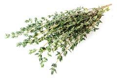 Трава тимиана свежая стоковая фотография