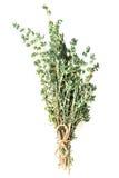 Трава тимиана свежая стоковая фотография rf