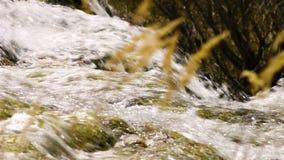 Трава увиденная водопадом до конца высокорослая сток-видео
