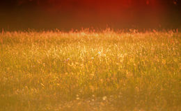 Трава луга захода солнца Стоковое Изображение RF