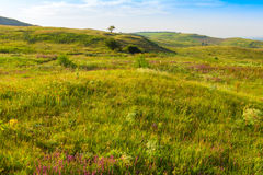 Трава луга на холмах Стоковые Фото
