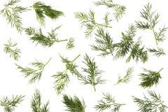 трава укропа свежая Стоковые Фото