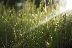 Трава утра Стоковое Изображение RF