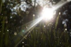 Трава утра Стоковые Изображения RF