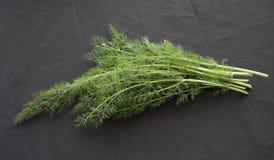 трава фенхеля органическая Стоковое фото RF