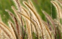 трава фонтана Стоковые Изображения