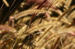 трава фонтана Стоковая Фотография