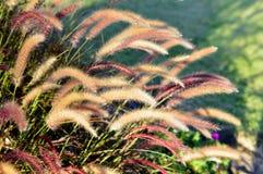 Трава фонтана Стоковые Изображения RF