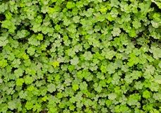 Трава формы цветка Стоковое Изображение RF