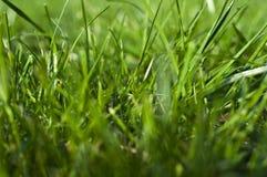 Трава фото, предпосылка травы, трава в солнечном свете,  Стоковые Изображения