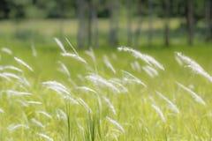 Трава цветка в ветре Стоковая Фотография RF