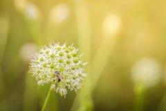 Трава цветка в мягкой предпосылке цвета стоковая фотография