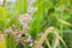 Трава цветка на времени лета утра туманном стоковые изображения