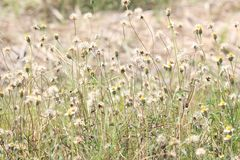 Трава цветка на ослабляет солнечный свет утреннего времени Стоковые Фотографии RF