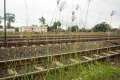 Трава цветка на ослабляет утреннее время Стоковые Изображения RF