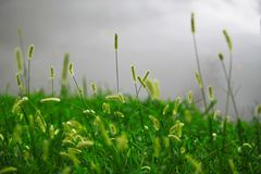 Трава цветка на сером озере Стоковая Фотография