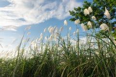 Трава цветка луга в внешней природе стоковое фото