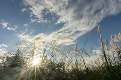 Трава цветка луга в внешней природе стоковая фотография rf