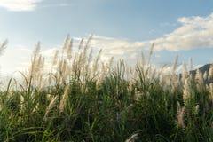 Трава цветка луга в внешней природе стоковое изображение rf