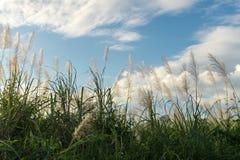 Трава цветка луга в внешней природе стоковое изображение