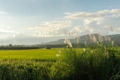 Трава цветка луга в внешней природе стоковая фотография