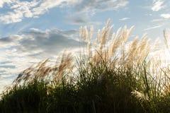 Трава цветка луга в внешней природе стоковые изображения