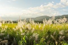 Трава цветка луга в внешней природе стоковые изображения rf
