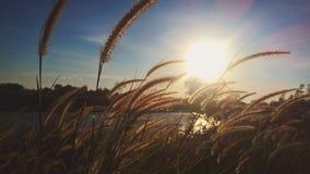 Трава цветка Стоковое Изображение RF