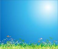 трава цветка Стоковые Изображения RF